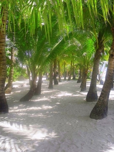Boracay Trees