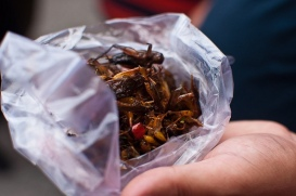 fried crickets...a snack in cambodia.