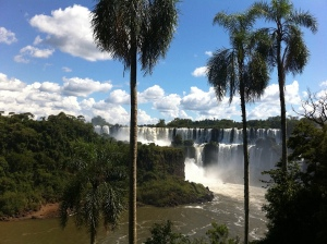 Iguazu with Palm tree