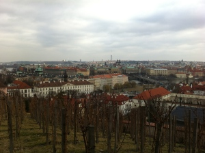 Prague vineyards