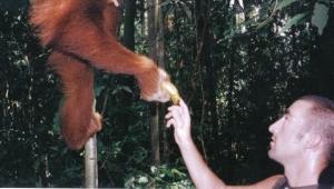 Sumatran Wildman