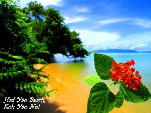 Had Yao Postcard