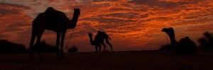 rajasthan-desert-safari