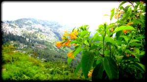 Yellow flower II