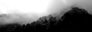 B & W mist