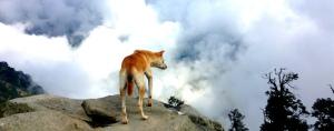 Dog at Triund