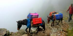 Donkeys on the edge of nothing