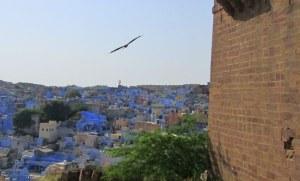 Jodhpur blog eagle