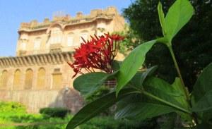 Jodhpur blog flower